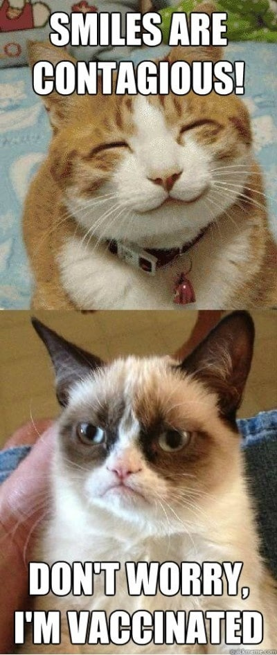 Animal Memes - dont worry