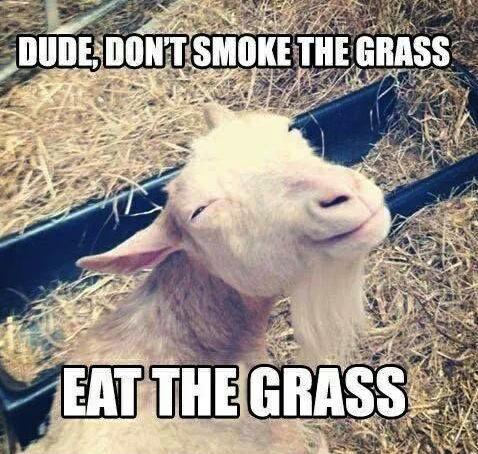 Animal Memes - eat the grass