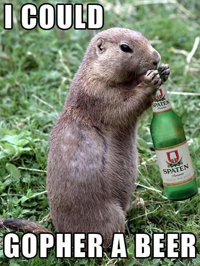 Animal Memes - i could gopher a beer