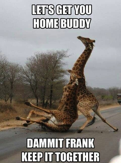 Animals Memes - dammit frank