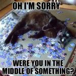Funny Animal Memes - oh im sorry