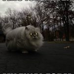 Funny Animal Memes - this isnt even my final form