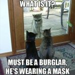 Funny Animal Memes - what is it