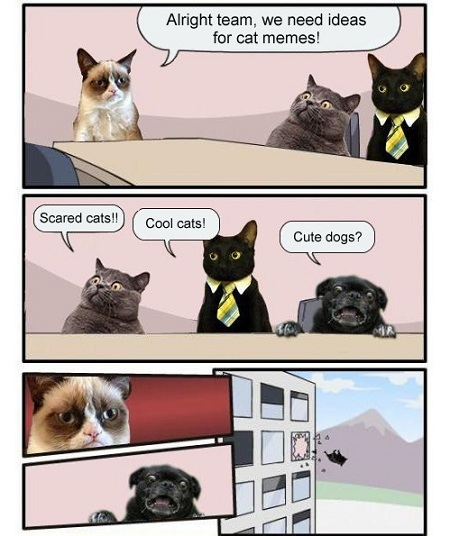 Funny Animals Memes - meanwhile at the cat meme factory