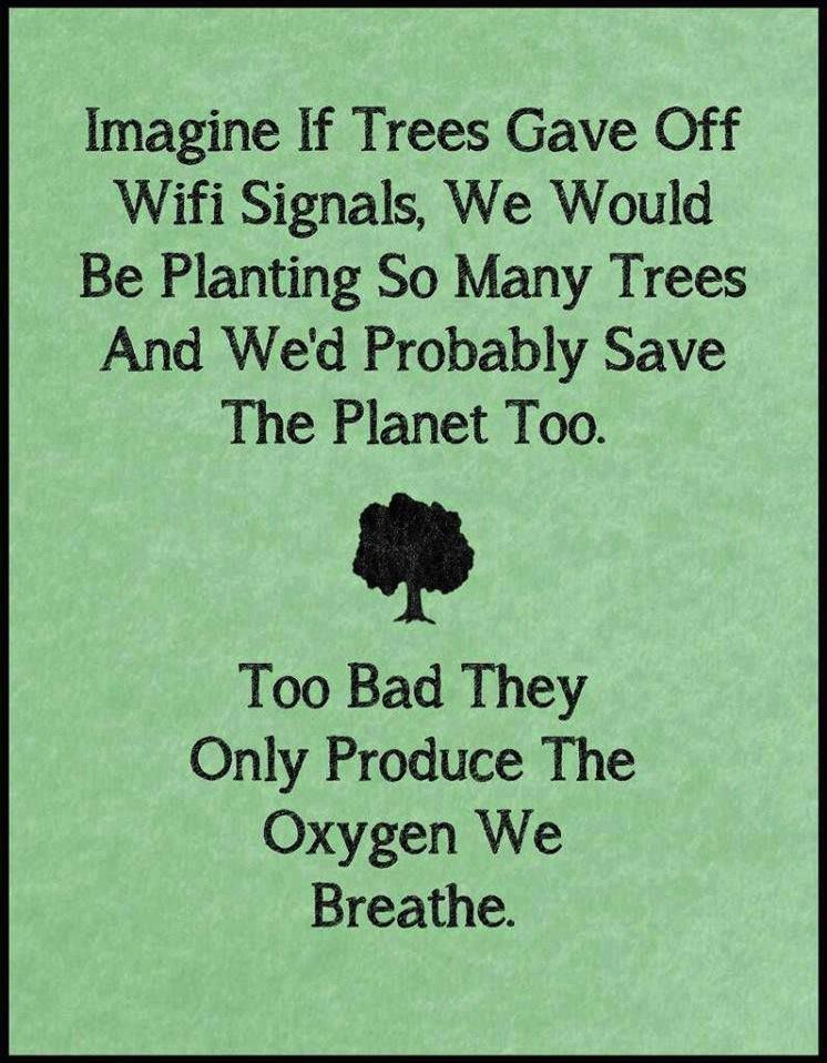Funny Ecards - imagine if trees