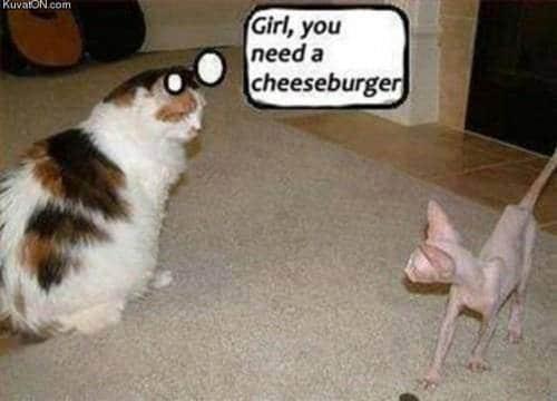 Animal Memes - girl you need a cheeseburger