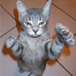 Animal Memes - i dont do touchy feely