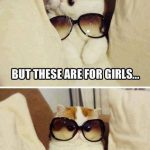 Cat Memes: but these are for girls