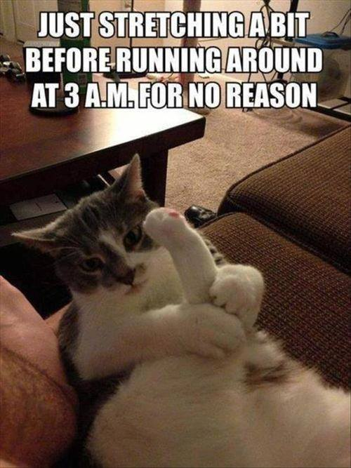 Funny Animal Memes - just stretching