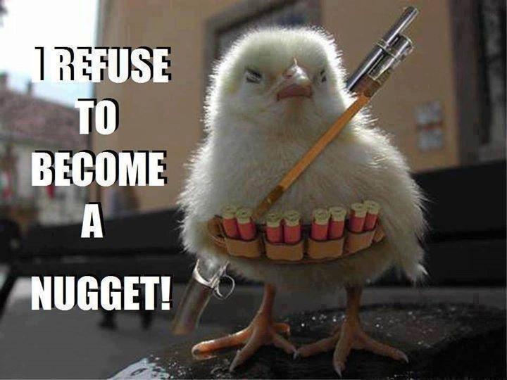 Funny Animal Memes - warrior chicken