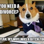 Funny Animal Memes - you need a divorce