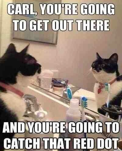 Funny Animal Memes - youre going to get there