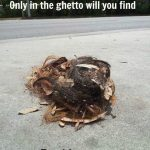 Funny Memes - only in the ghetto