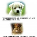 Animal Memes - difference between cat and dog