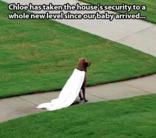 Animal Memes - guard dog