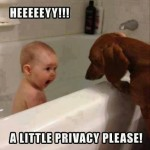 Animal Memes: a little privacy
