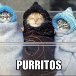 Funny Animal Memes - purritos