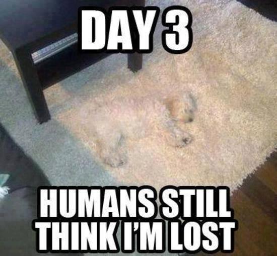 Funny Animal Memes - still think im lost