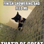 Funny Animal Memes - yeah if you could