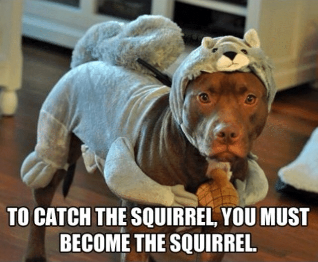 Funny Animal Memes - you must become