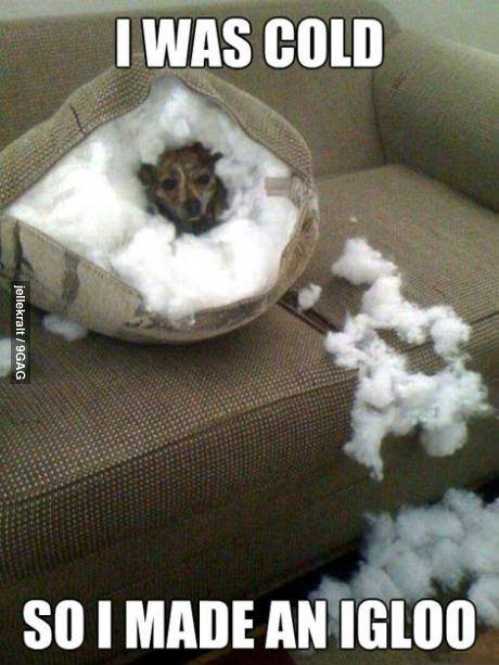 Funny Animals Memes - i was cold