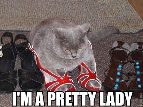 Funny Animals Memes - im a pretty lady