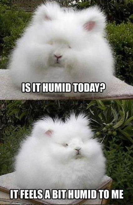 Funny Animals Memes - is it humid today
