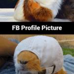 Animal Memes - fb profile pic