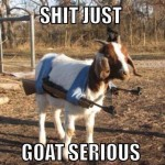 Animal Memes - goat serious