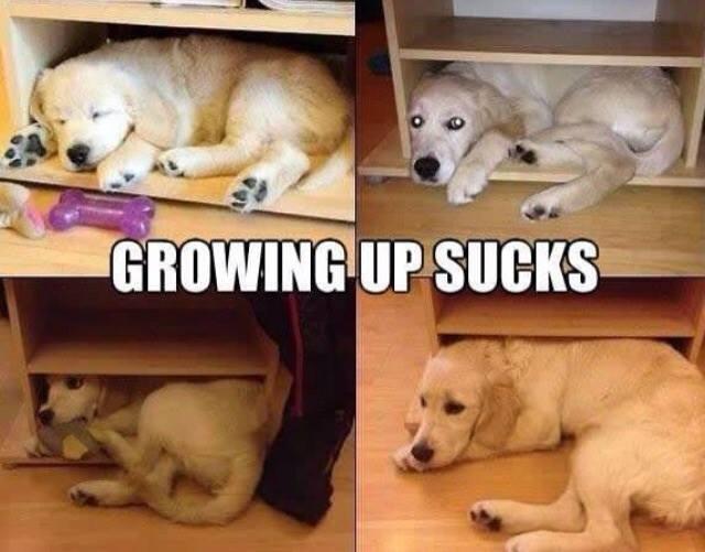 Animal Memes - growing up sucks