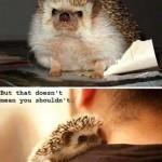 Animal Memes - hug a hedgehog