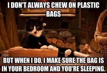 Animal Memes - i dont always chew