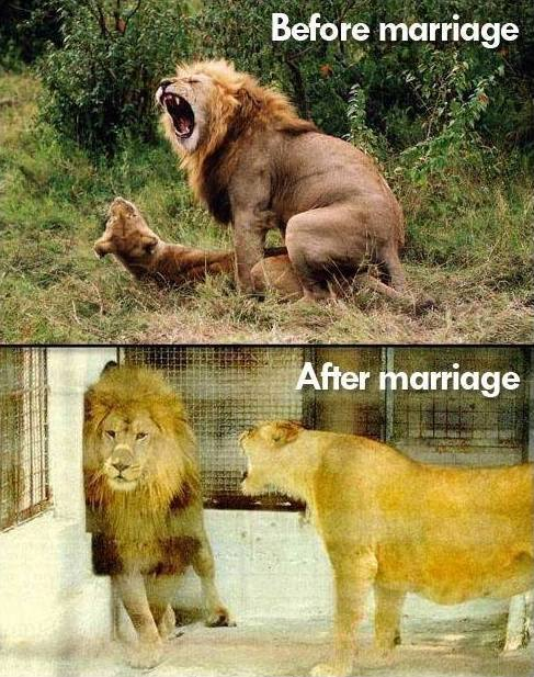 Animal Memes: before and after