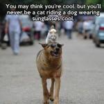 Animal Memes: cat riding a dog