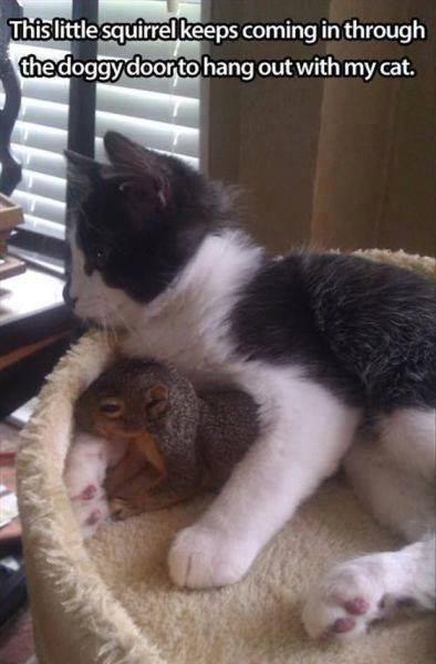 Funny Animal Memes - little squirrel
