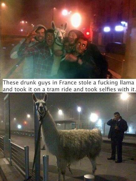 Funny Animal Memes - selfies with a llama