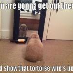 Funny Animal Memes - show that tortoise