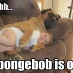 Funny Animal Memes - spongebob is on