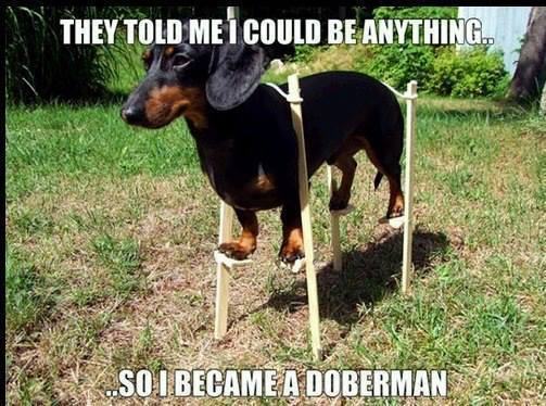 Funny Animal Memes - they told me