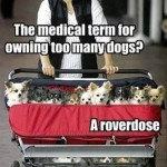 Funny Animal Memes - too many dogs