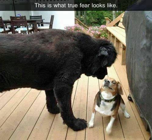 Funny Animal Memes - true fear