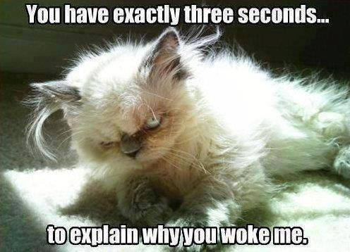 Funny Animal Memes - why did you wake me