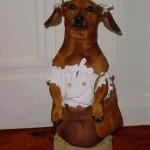 Funny Animals Memes - im off to walmart