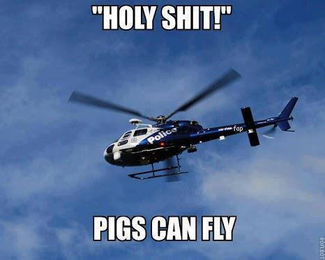 Funny Memes - pigs can fly