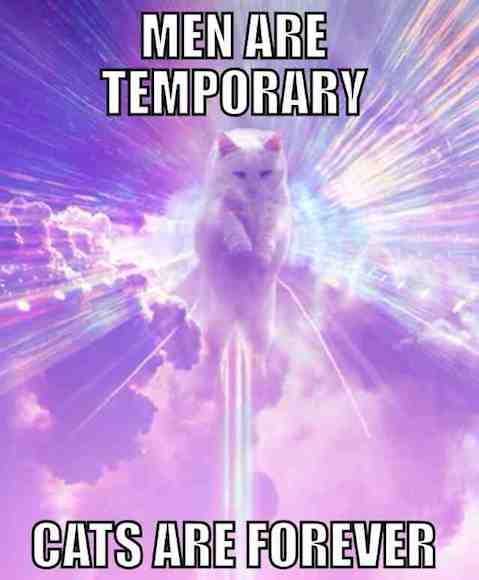Funny Memes: cats are forever