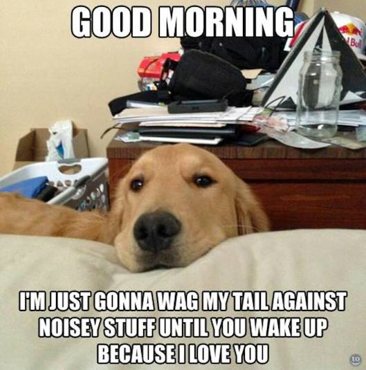 Animal Memes - good morning