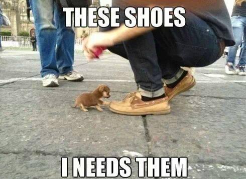 Animal Memes - i need them