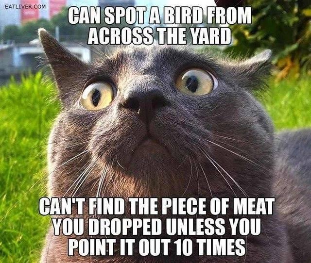 Animals Memes: can spot a bird