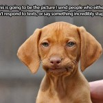 Dog Memes - disapproving doggie