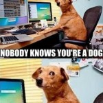 Funny Animal Memes - nobody knows